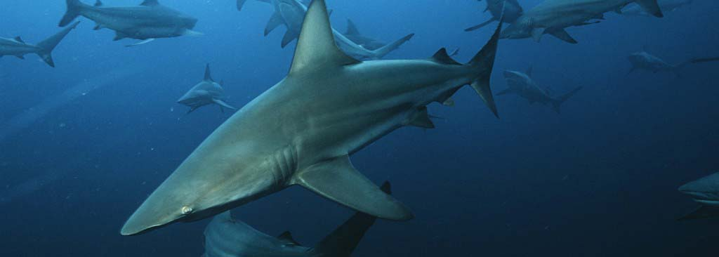 slider-sharksm