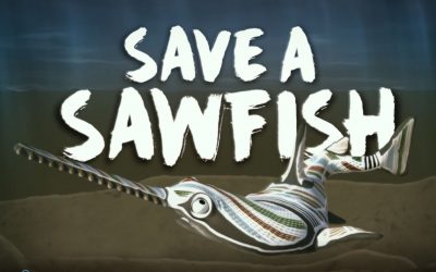 Release a sawfish video