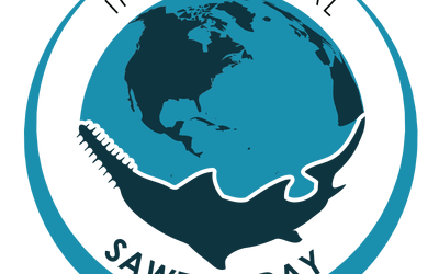 International Sawfish Day in Cairns October 2019